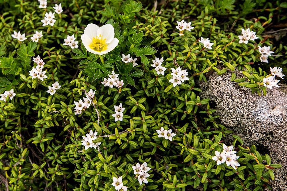 2017.07.14白山の花が本格化23