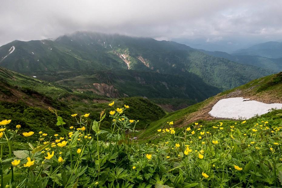 2017.07.14白山の花が本格化19