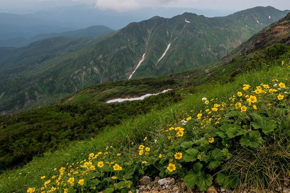 2017.07.14白山の花が本格化17