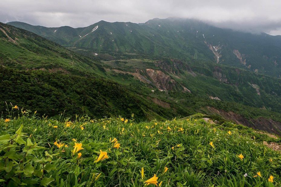 2017.07.14白山の花が本格化16