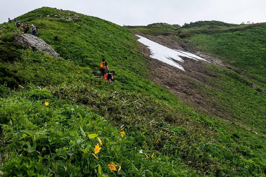 2017.07.14白山の花が本格化15
