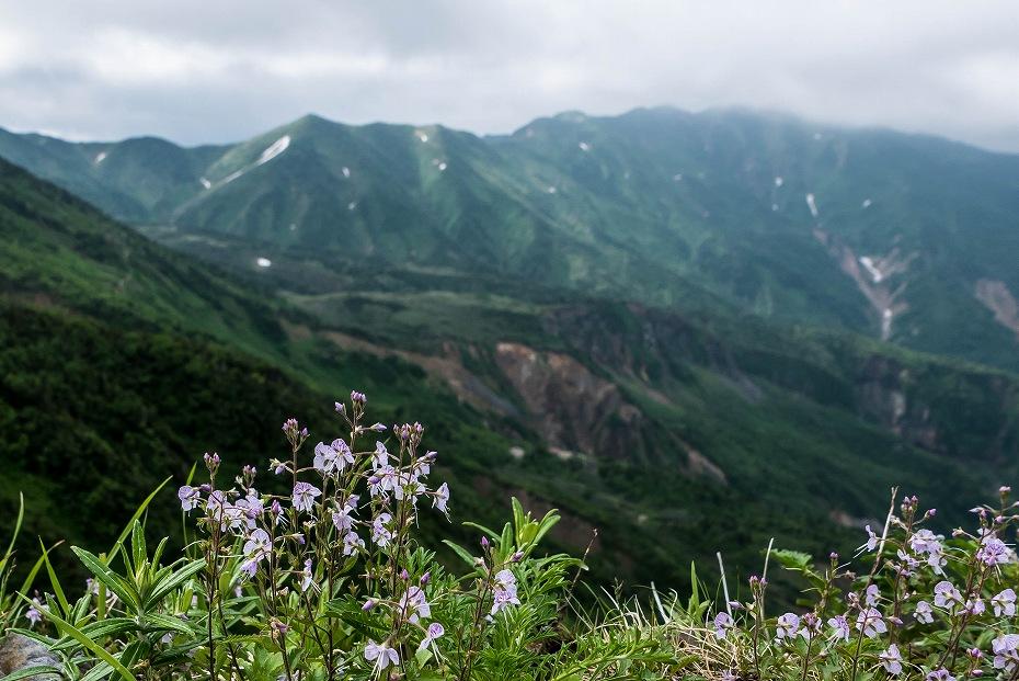 2017.07.14白山の花が本格化14