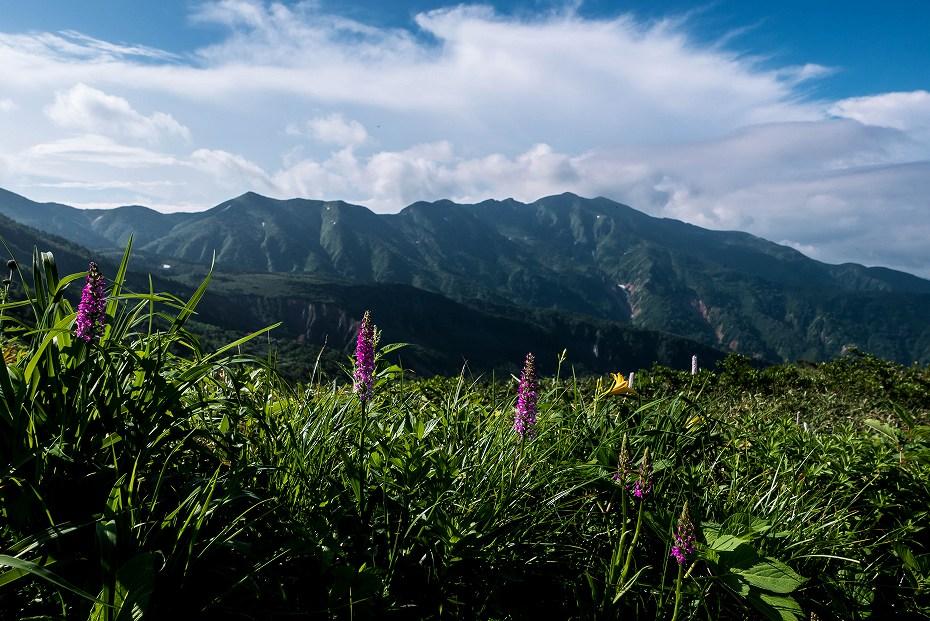 2017.07.14白山の花が本格化10