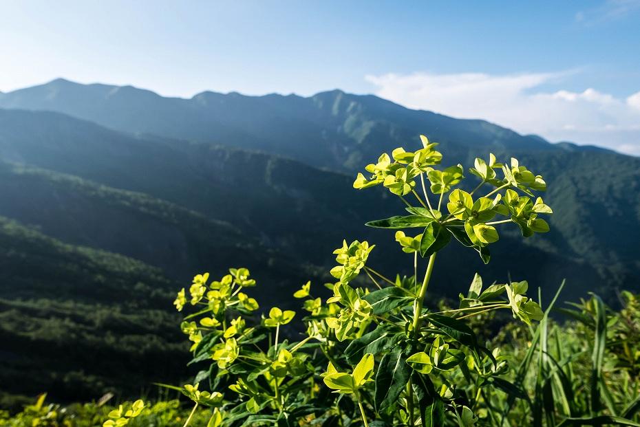 2017.07.14白山の花が本格化5