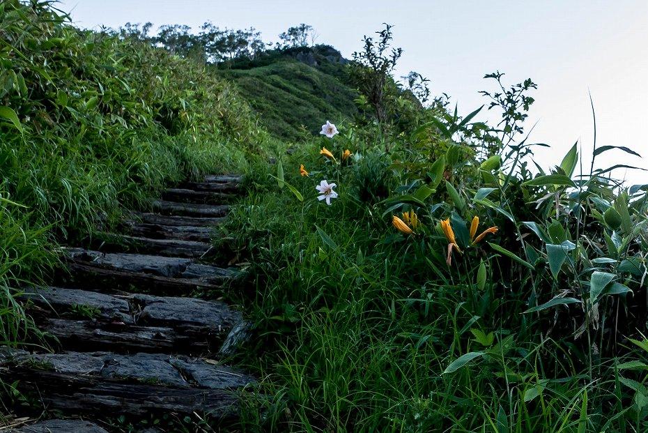 2017.07.14白山の花が本格化3