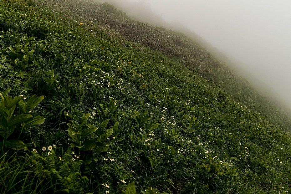 2017.07.21南竜ヶ馬場から別山までの花48