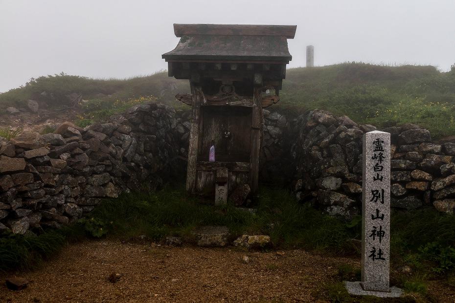 2017.07.21南竜ヶ馬場から別山までの花29