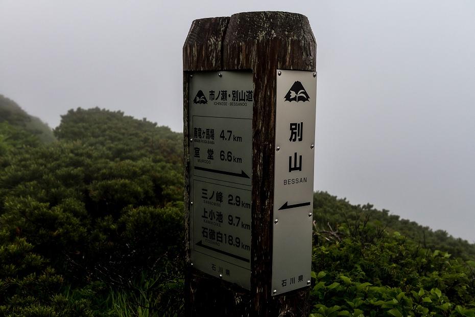 2017.07.21南竜ヶ馬場から別山までの花27