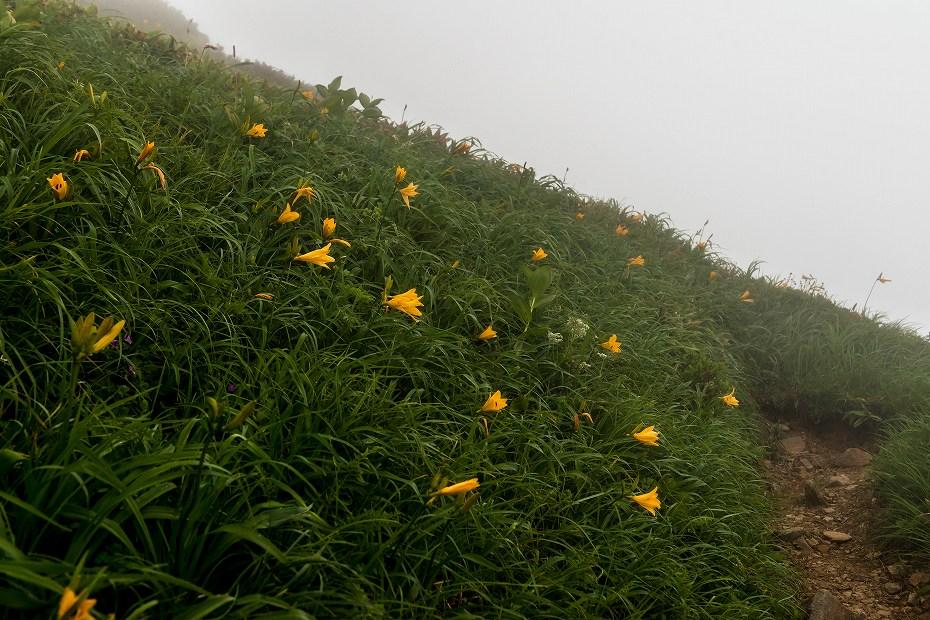 2017.07.21南竜ヶ馬場から別山までの花24