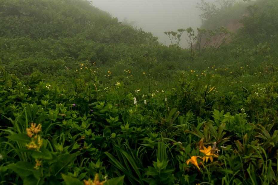 2017.07.21南竜ヶ馬場から別山までの花15