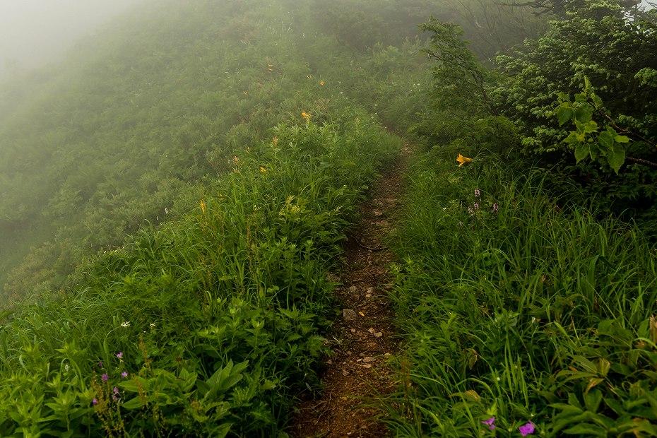 2017.07.21南竜ヶ馬場から別山までの花13