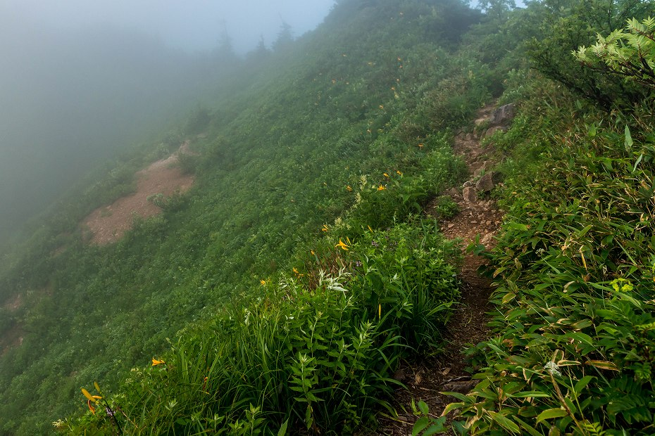 2017.07.21南竜ヶ馬場から別山までの花9