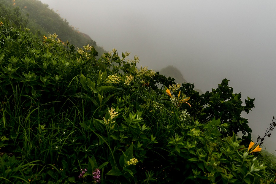 2017.07.21南竜ヶ馬場から別山までの花5