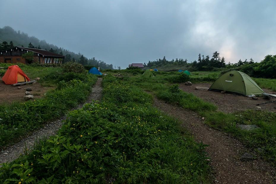 2017.07.21南竜ヶ馬場から別山までの花1