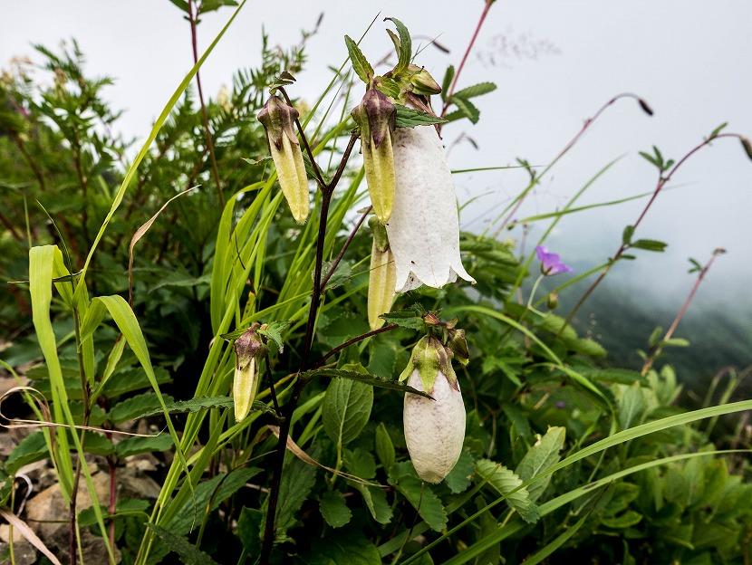 2017.08.02展望歩道の花々9