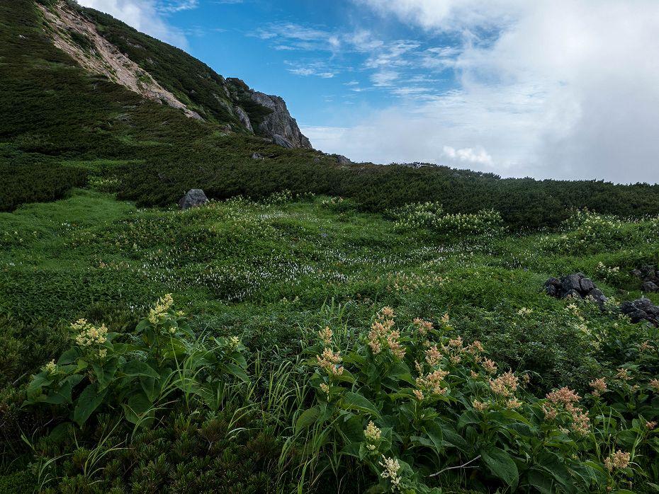 2017.08.03大汝峰から七倉の辻までの風景9