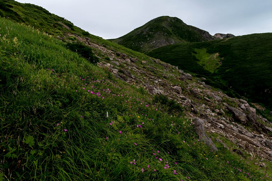 2017.08.14室堂平の花々1n