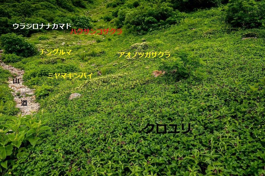 2017.08.14白山_お花松原_クロユリ3