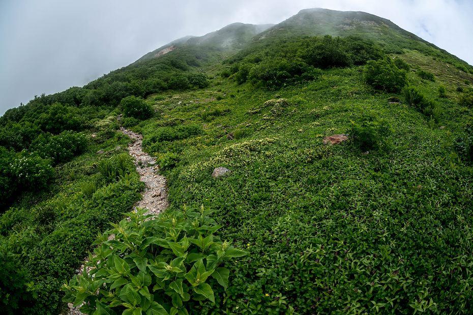 2017.08.14白山_お花松原_チングルマ1