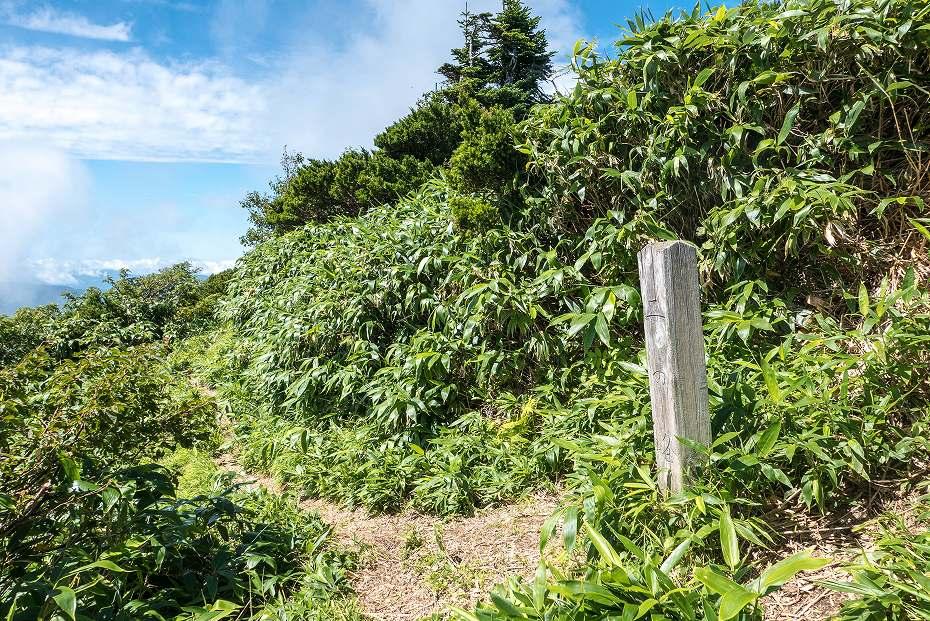 2017.08.31石徹白登山道上り22