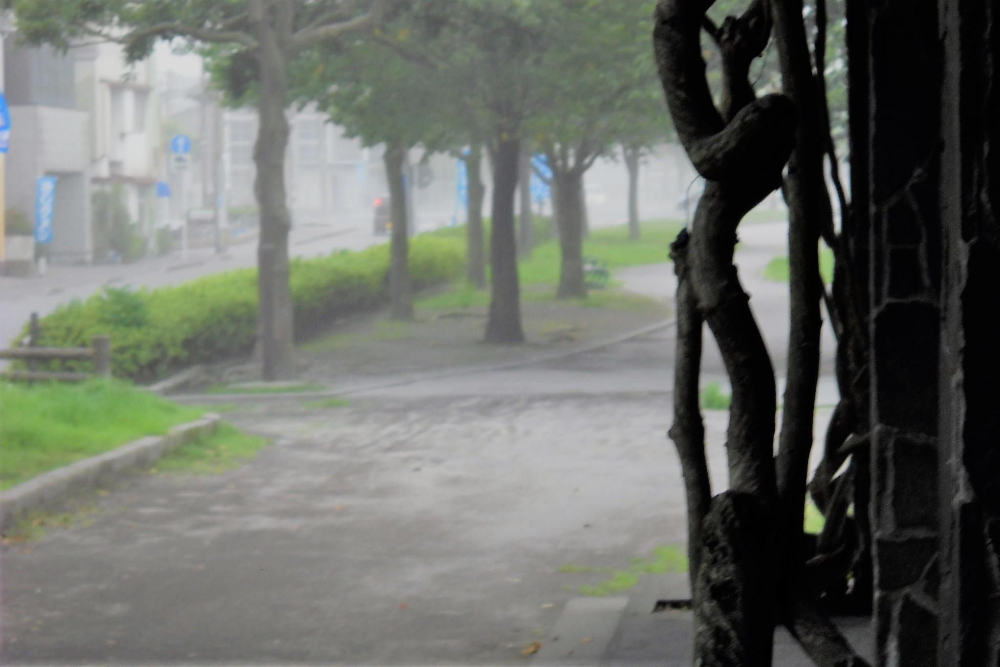 桜島の降灰