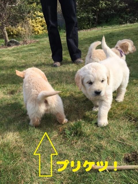 170827 puppy (480x640)