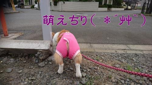 201708萌えちり