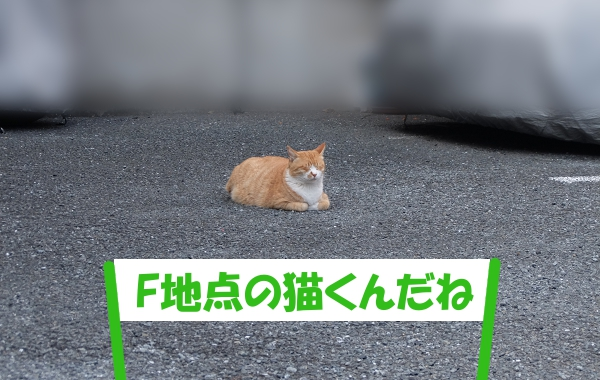 「F地点の猫くんだね」