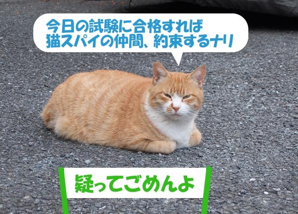 今日の試験に合格すれば猫スパイの仲間、約束するナリ 「疑ってごめんよ」