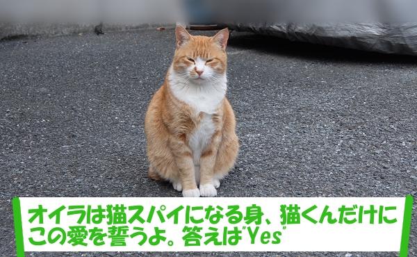 「オイラは猫スパイになる身、猫くんだけにこの愛を誓うよ。答えは