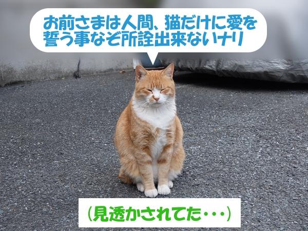 お前さまは人間、猫だけに愛を誓う事なぞ所詮出来ないナリ (見透かされてた・・・)