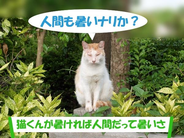 人間も暑いナリか? 「猫くんが暑ければ人間だって暑いさ」