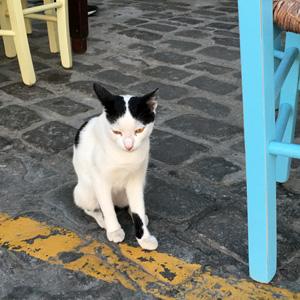 Antigoni Taverna看板猫