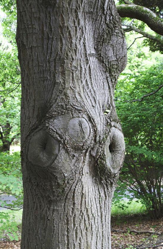 木の幹-920