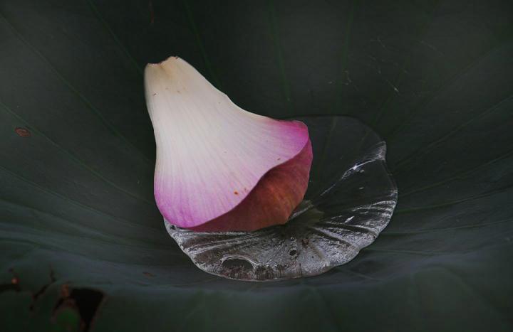 散り花弁-247-