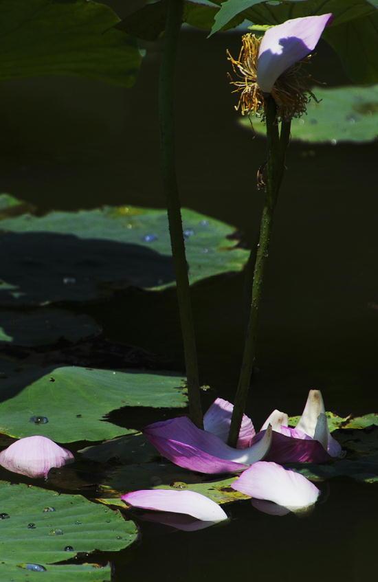 散り花-348-11