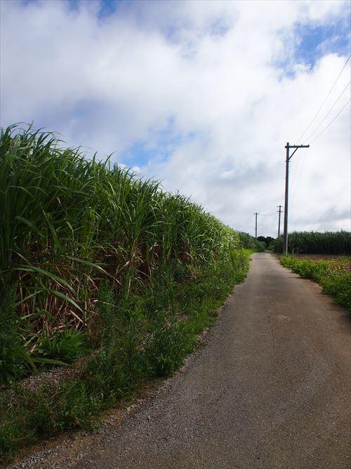 ゆうブログケロブログ沖縄2017 (37)