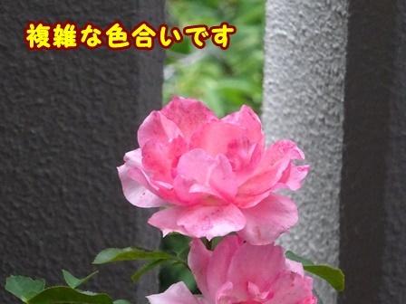 DSC02657a.jpg