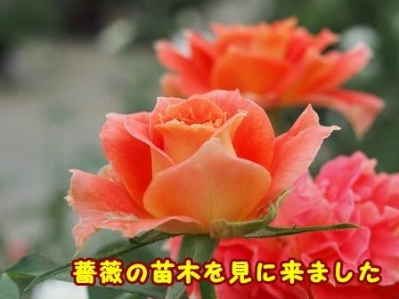 P8267163a.jpg