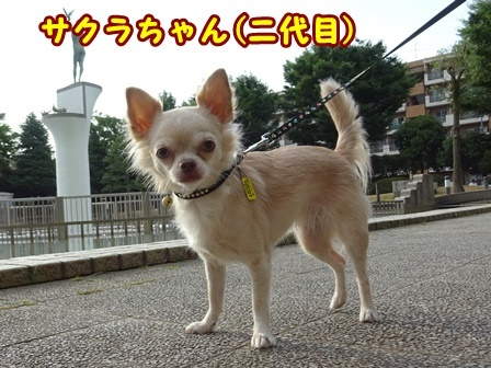 blog9811a.jpg