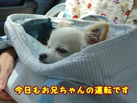blog9826a.jpg
