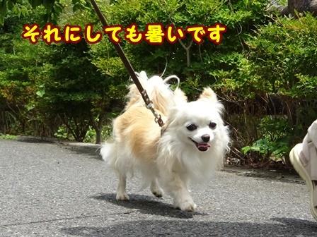blog9832a.jpg