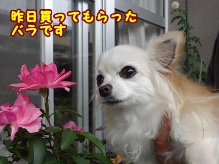 blog9932a.jpg