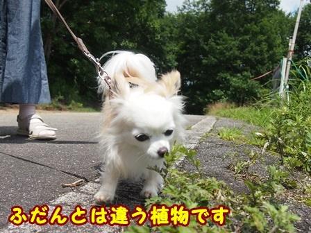 blog9941a.jpg