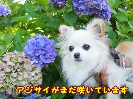 blog9973a.jpg