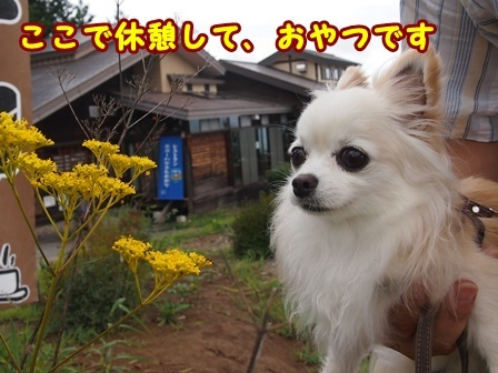 bloga001a.jpg