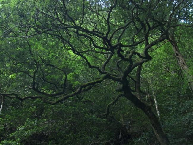 仁淀ブルーと呼ばれる安居渓谷の木々