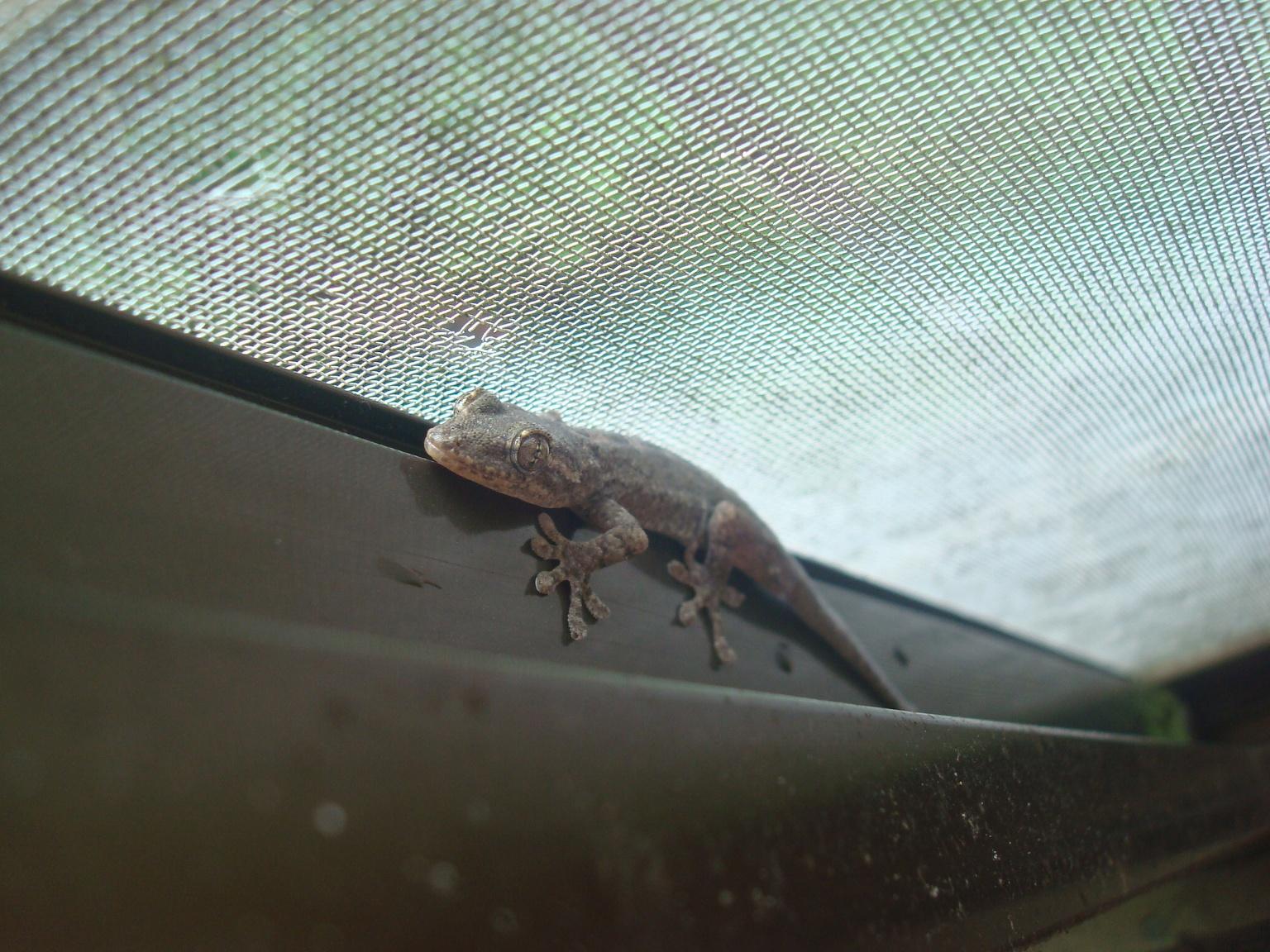gecko-5.jpg
