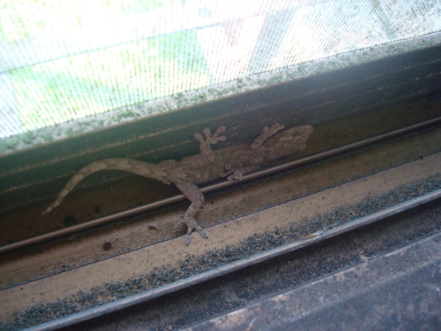 gecko-6.jpg