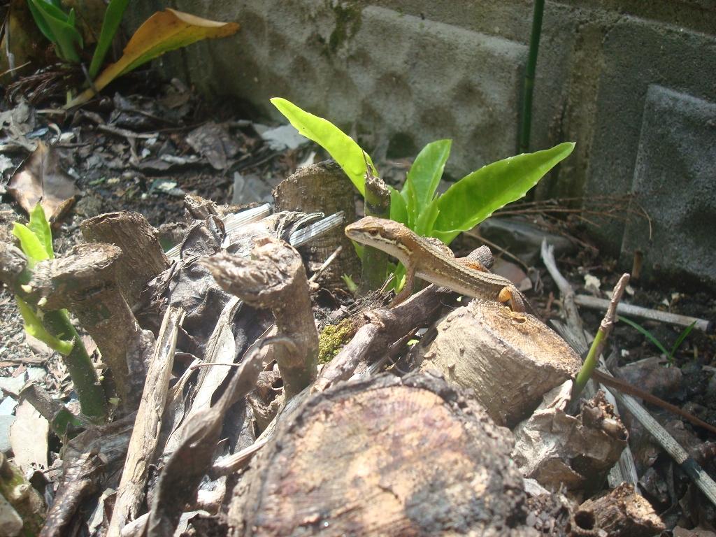 grass-lizard-10.jpg